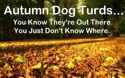 autumn dog poop leaves - 7888775168