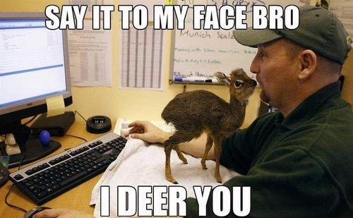 bro puns deer classic animals