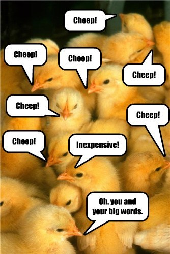 cute chicks chickens smart inexpensive - 7888842752