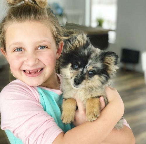 amber alert pets apps lost pets - 7888901