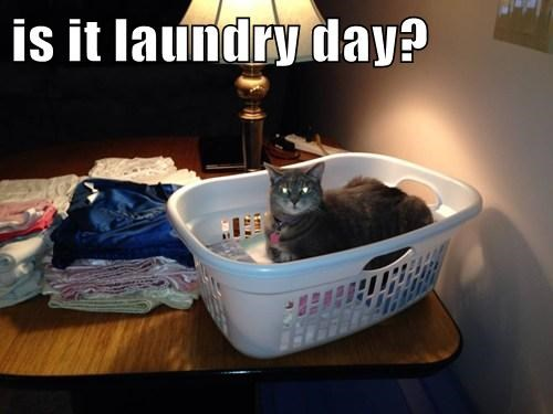 Cats cute help laundry - 7889019648