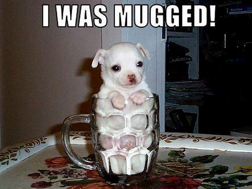 dogs,mugged,puppies,puns,cute