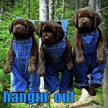 cute dogs hanging out puppies overalls - 7889061376