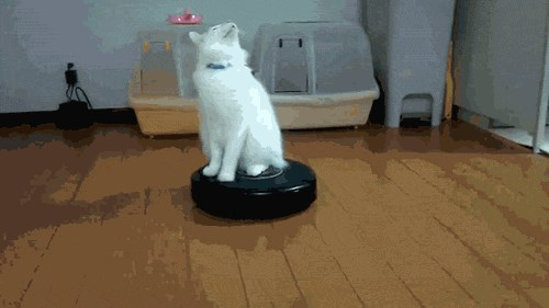 Cat Spinning on a Roomba