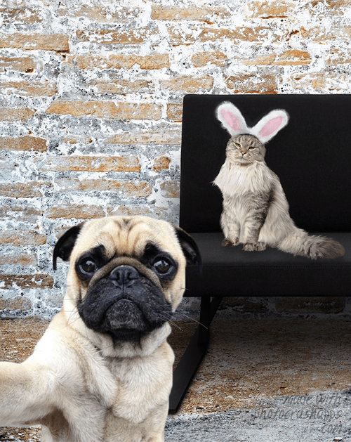 Cats costume bunny ears dogs funny - 7889089792