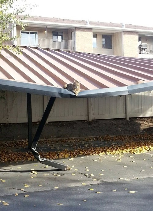 carport Cats there I fixed it g rated - 7889122816