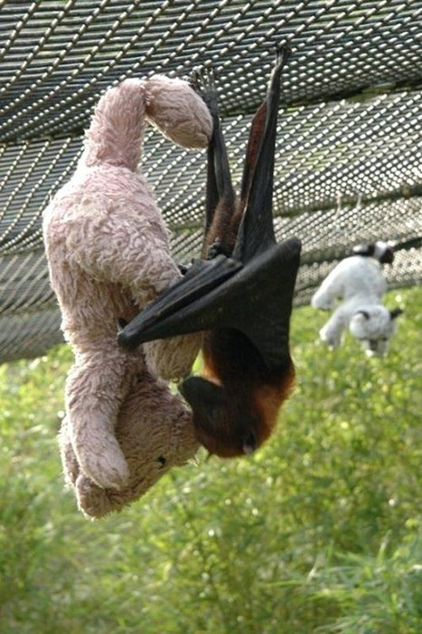 cuddle,bats,teddy bears,cute,squee