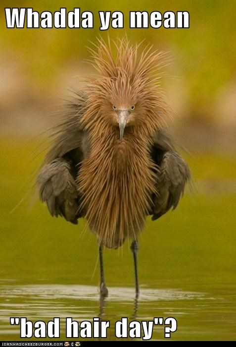 angry bad hair birds bad feathers - 7889218816