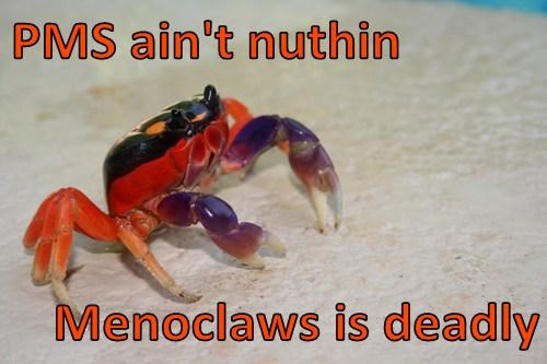 claws funny puns - 7889518848
