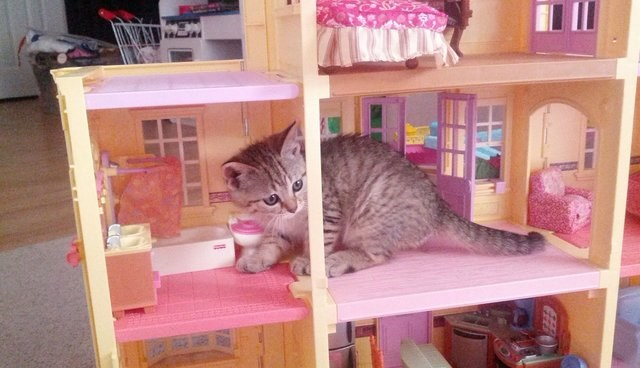 cats breaking into a barbie house