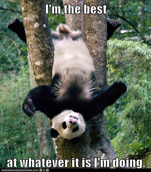 cute climbing trees upside down panda - 7889935872