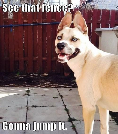 dogs fence jump it - 7890233856