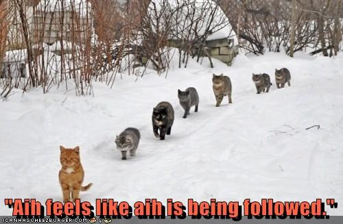 Cats,follow,snow,pack