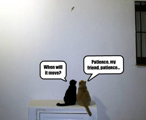 Cats cute kitten lizards prey - 7890837760