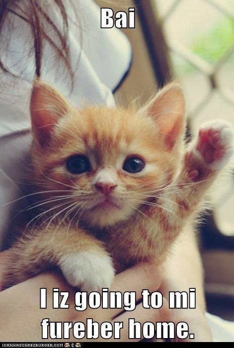 Cats forever home goodbye kitten - 7890919680