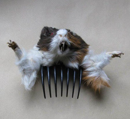 fashion accessory taxidermy
