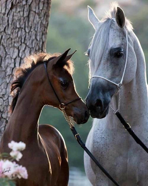 beautiful friends horses squee - 7891169280
