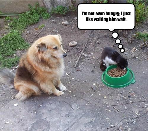 Cheezburger Image 7891402496