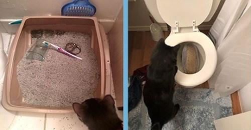 lol funny cats jerks assholes Cats funny - 7891461