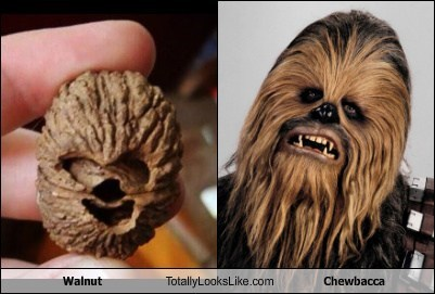 walnuts chewbacca totally looks like funny - 7891716352