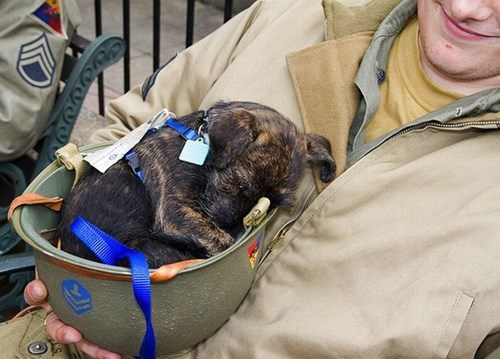 veterans day,cute,puppies,military