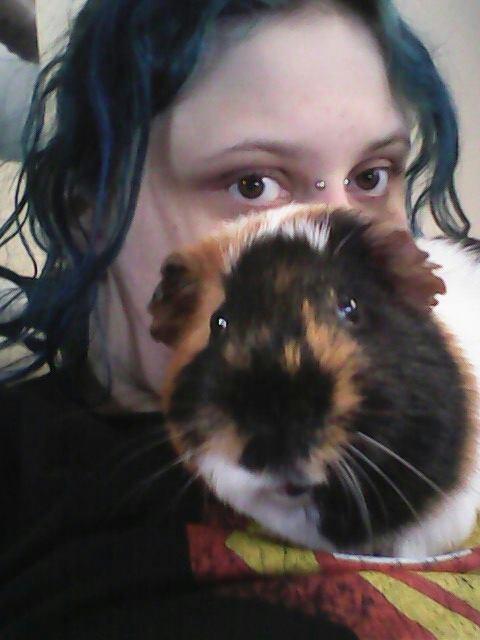guinea pigs,funny,pets,photobomb