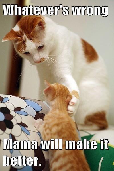 Babies kitten mama comfort Cats - 7892210432