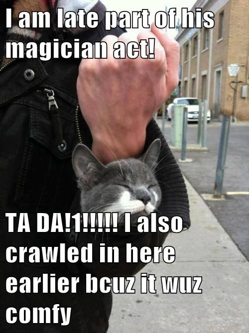 assistant Cats magic warm - 7892332032