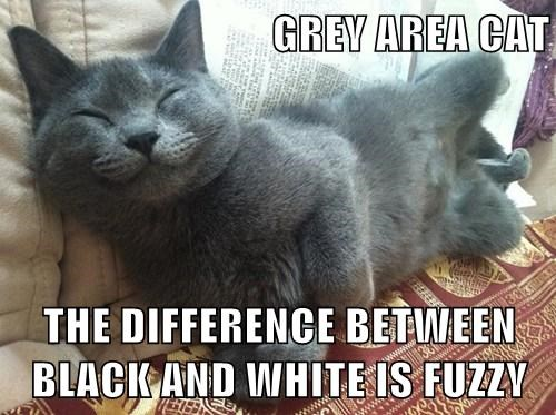 grey cute fuzzy Cats - 7892345088
