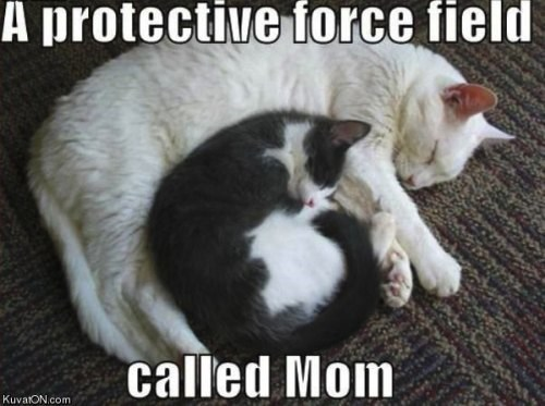Cats,kitten,mom,protect,love,force feild