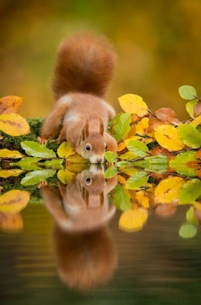 cute drink Fluffy tail squirrels squee - 7892433920