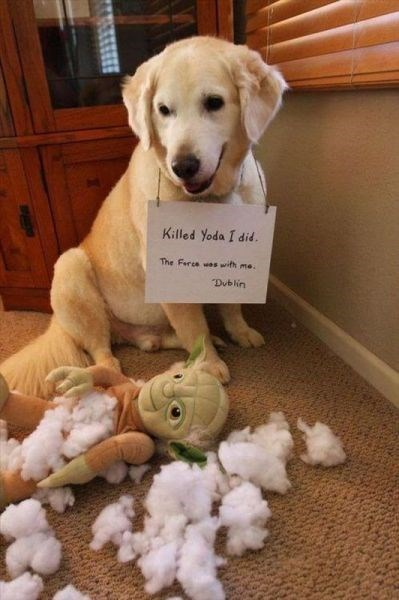 cute dogs destroyed star wars toys yoda