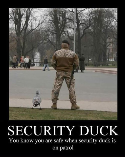 backup,ducks,security,puns,military
