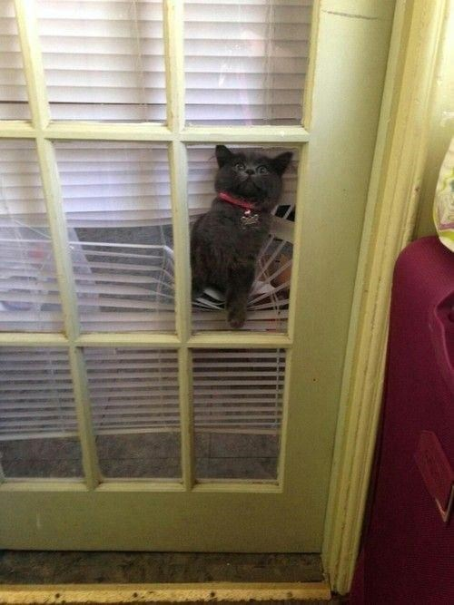 blinds Cats cute kitten - 7892451584