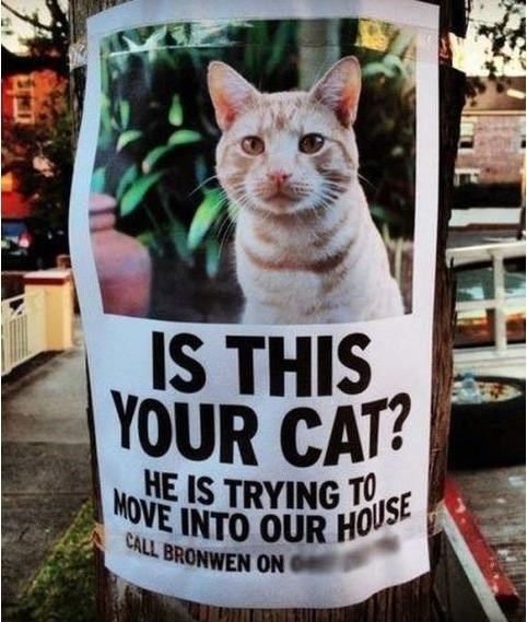 Cats poster funny sign is this your cat