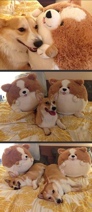 cute dogs stuffed animals toys share