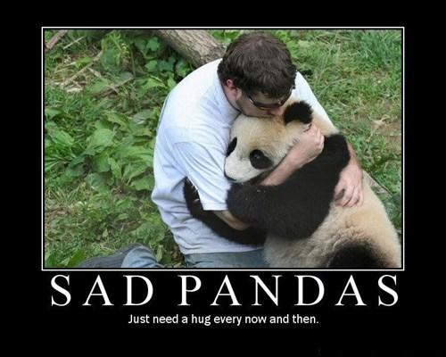 bros funny panda Sad - 7892473856