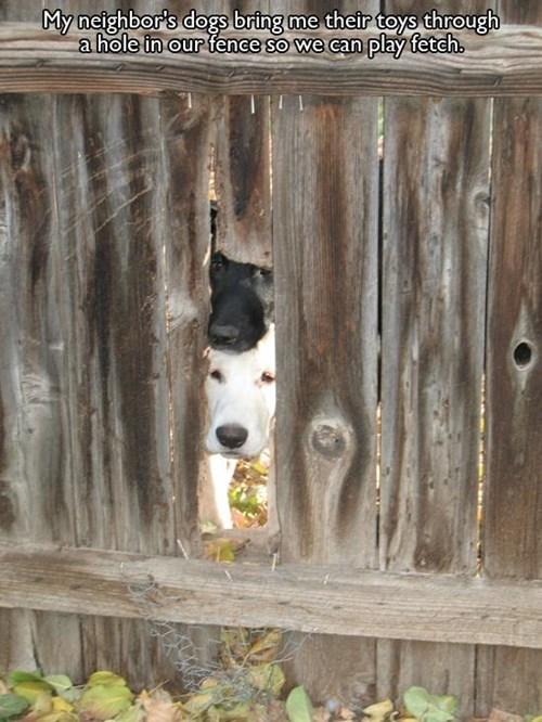 cute fence fetch play - 7892474112