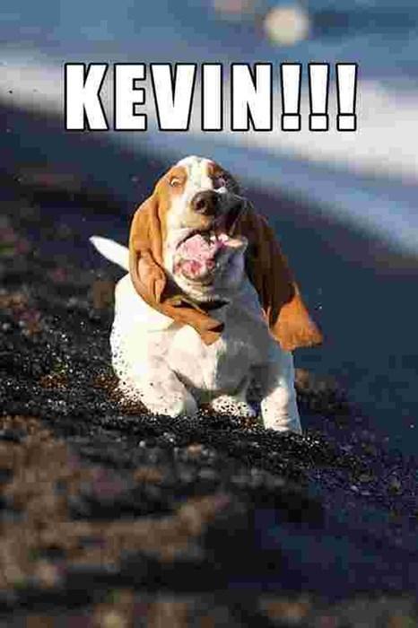 beach dogs funny random kevin running - 7892481024