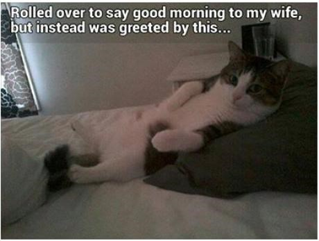 Cats bed surprise morning wife - 7892485376