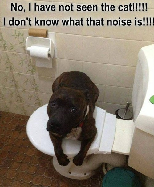 Cats,dogs,flush,mischief,guilty,toilet