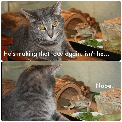 Cats funny making faces lizards teasing - 7892505088