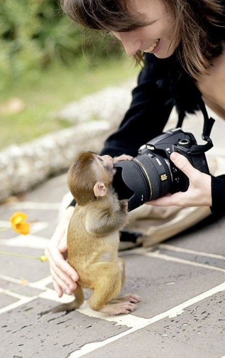 camera cute photography monkeys squee - 7892522240