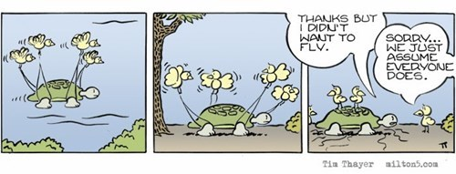 brains birds turtles funny web comics - 7892600320