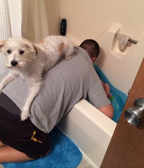 Babies bathtime dogs parenting g rated - 7892729600