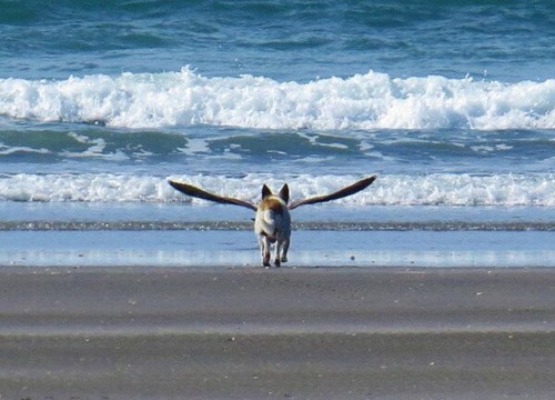 birds beach dogs photobomb perfectly timed