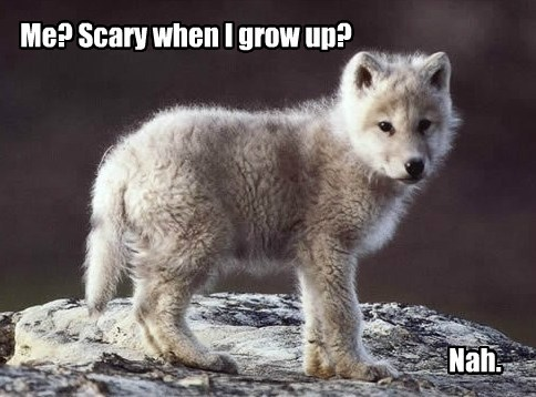 wolves dogs puppies cute - 7892787200