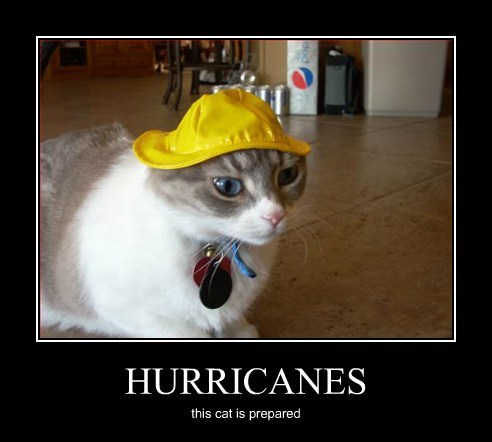HURRICANES this cat is prepared