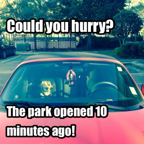 dogs,patience,park,play,hurry