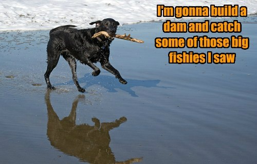 fishes,dam,dogs,build